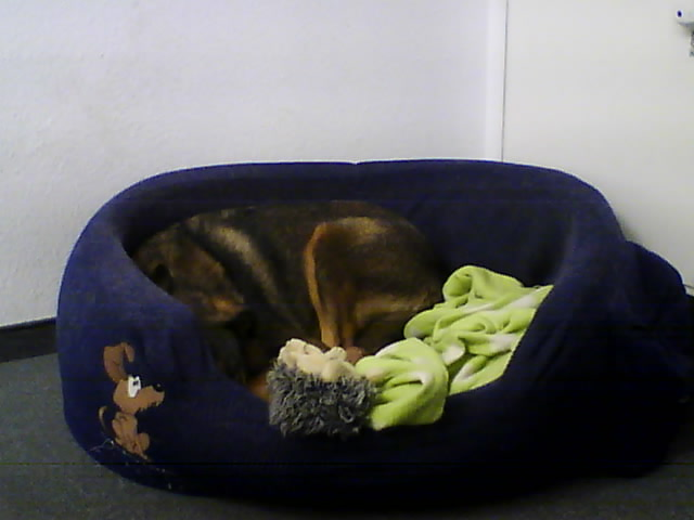 Hunde-Webcam