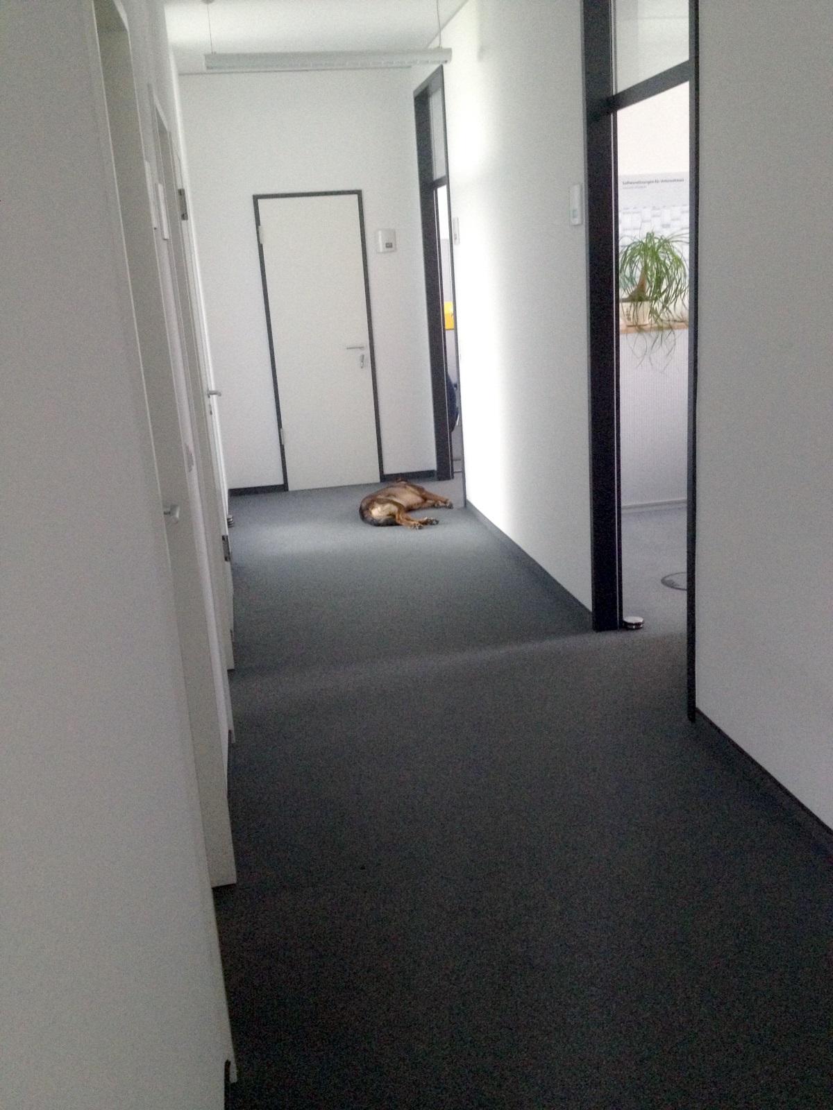 hund-im-buero-01